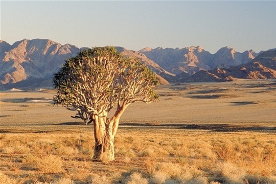 Photo de paysage sud-africain