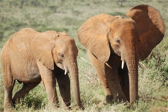 Photo de safari Samburu et Buffalo Springs