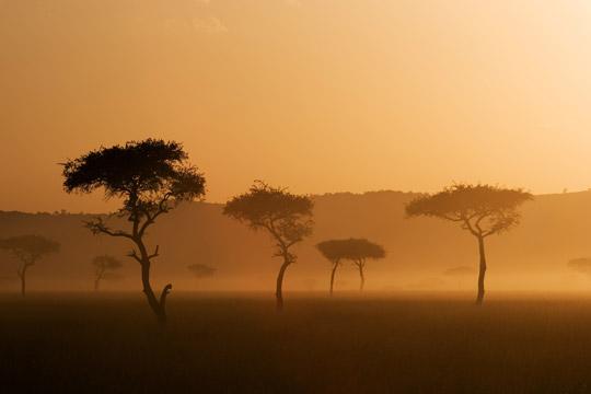 Photo de safari Masai Mara