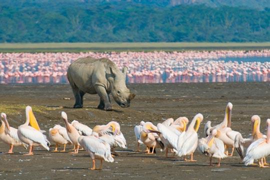 Photo de safari Lac Nakuru