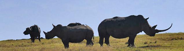 Safari Amboseli luxe