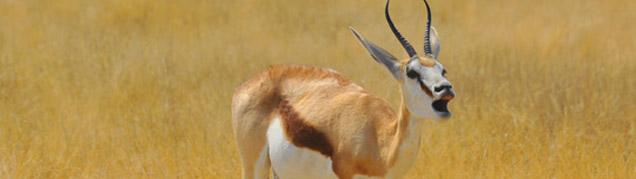 Safari Etosha luxe