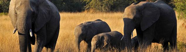 Safari Kruger luxe