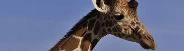 Safari Samburu et Buffalo Springs luxe