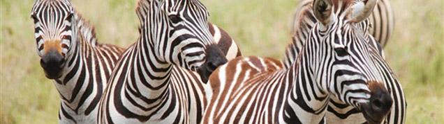 Safari Serengeti luxe