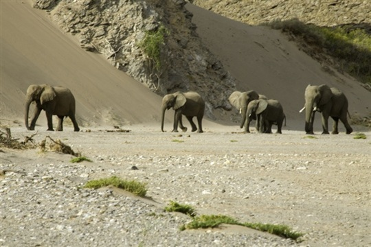 Photo d'éléphants de Namibie